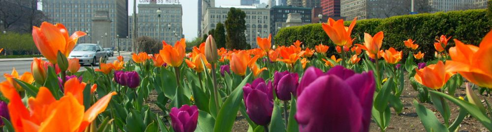 Travel the Chicago in Spring